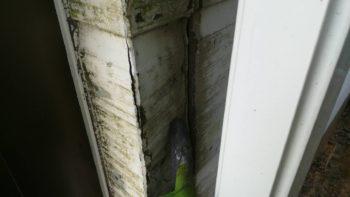 とコーキング破断箇所から経年雨水の浸入により通し柱が腐食していました。
