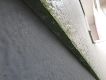 吉野川市 外壁 苔 塗装