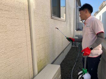 外壁 苔汚れ 落とし